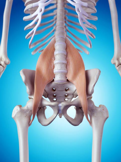 This image has an empty alt attribute; its file name is psoas.jpg